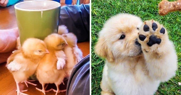 17 fotografii cu animale care îți vor vindeca sufletul mai bine decât psihoterapia