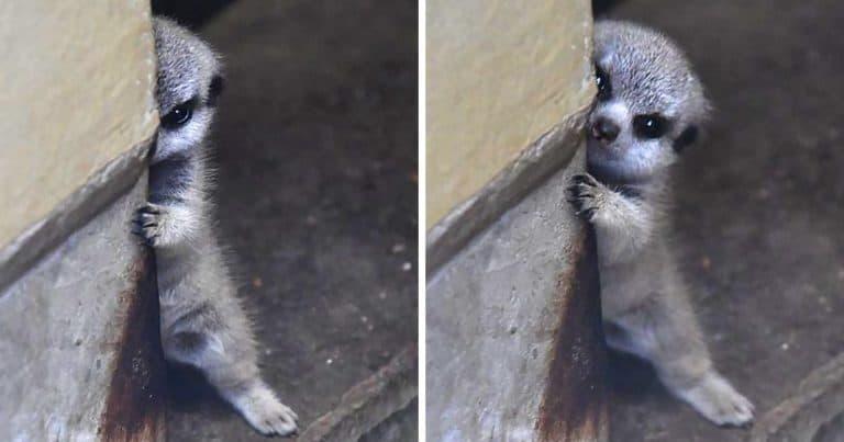 23 de animale de companie care sunt atât de timide, încât ne fac să ne indragostim de ele