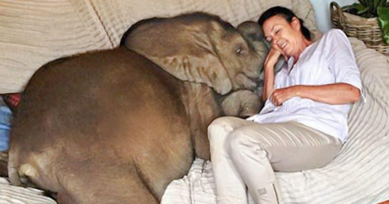 O femeie a salvat un pui de elefant , iar acum sunt de nedespărțit