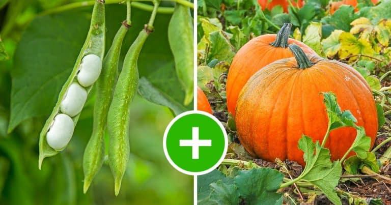 8 perechi de legume care cresc perfect împreună și 5 combinații de evitat