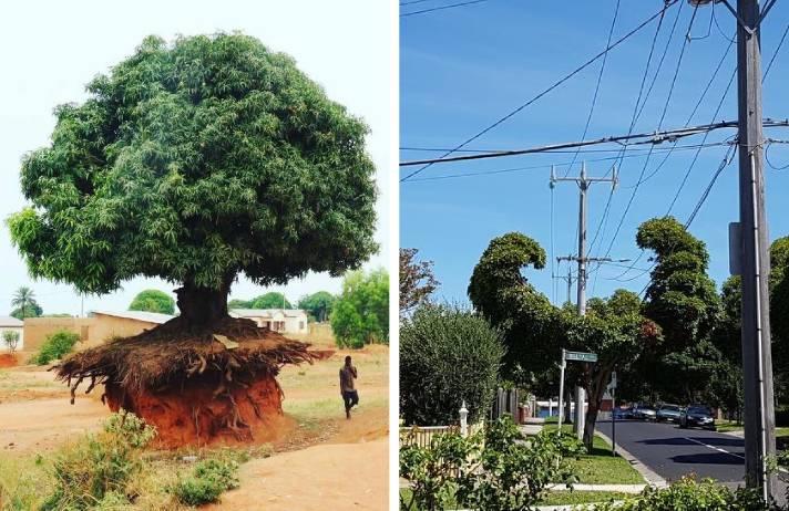 15 arbori care ilustrează o incredibilă voință de a trăi