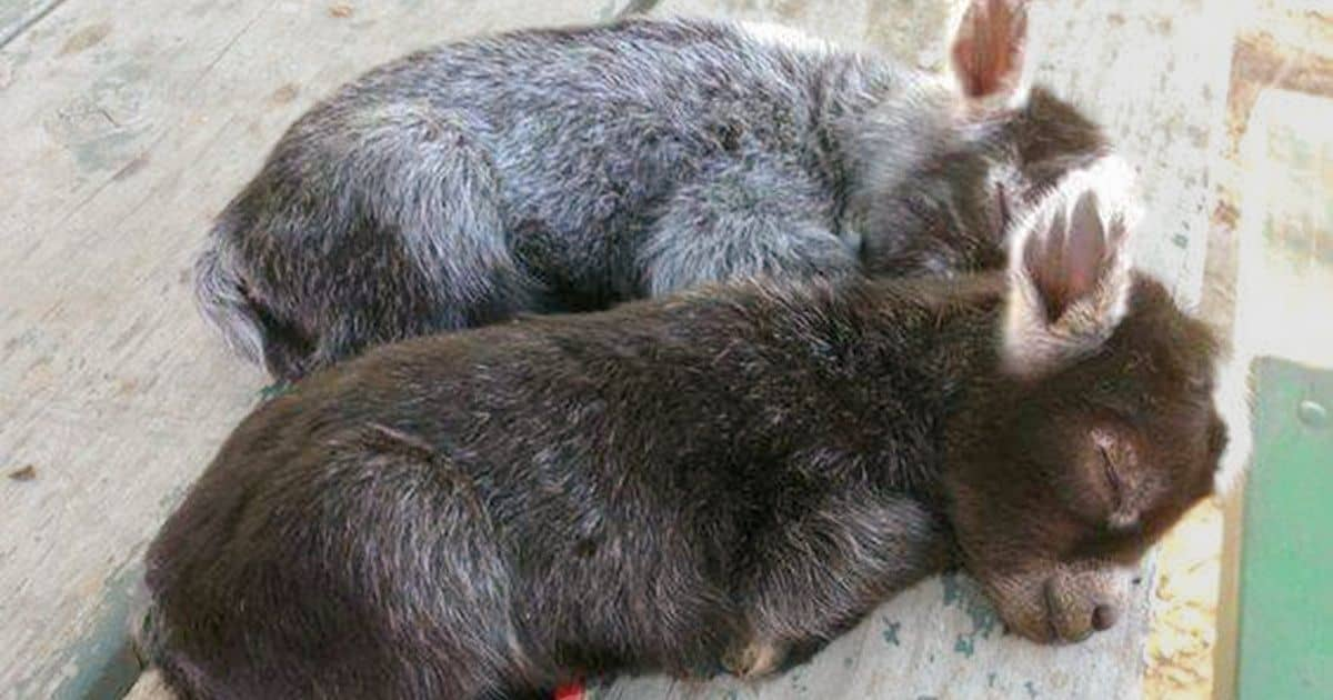 16 fotografii cu animale care sunt mai liniștitoare ca orice pastilă anti-stres