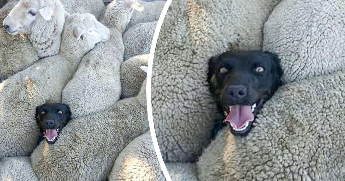 20 de animale de companie care au cucerit intrega lume cu inocenta lor