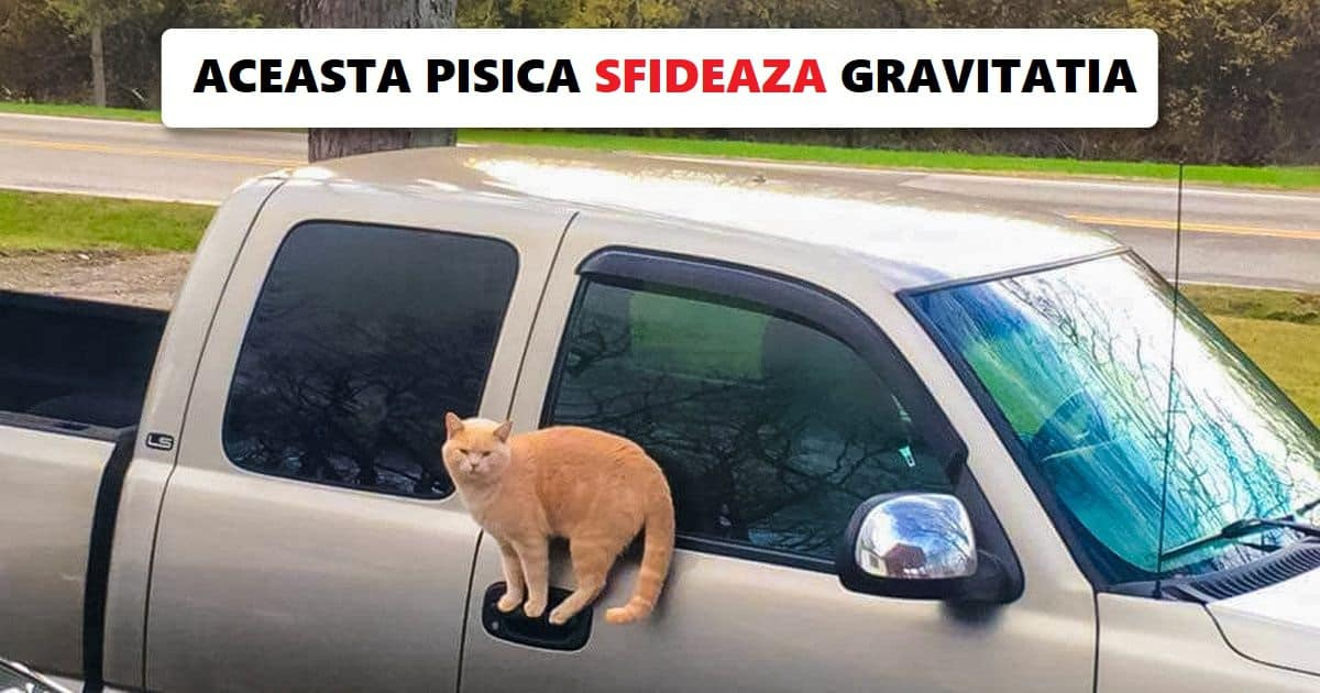 """15 fotografii care ne dovedesc pisicile sunt niste """"mici extraterestri"""""""